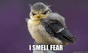 Angst bang zijn